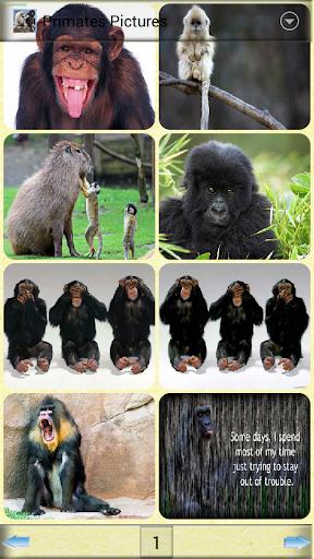靈長類動物圖片