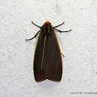 Lithosiinae, Arctiinae