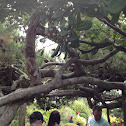 Interwoven pine branches