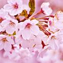 Cherry Blossom Theme HD logo
