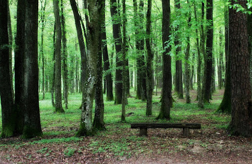 Bukovniški gozd by Jože Borišek - Uncategorized All Uncategorized