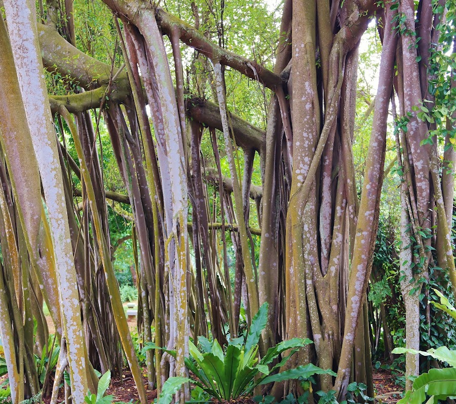 Old trees by Koh Chip Whye - Nature Up Close Trees & Bushes (  )