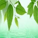 Green Leaves n Drops Of Water logo