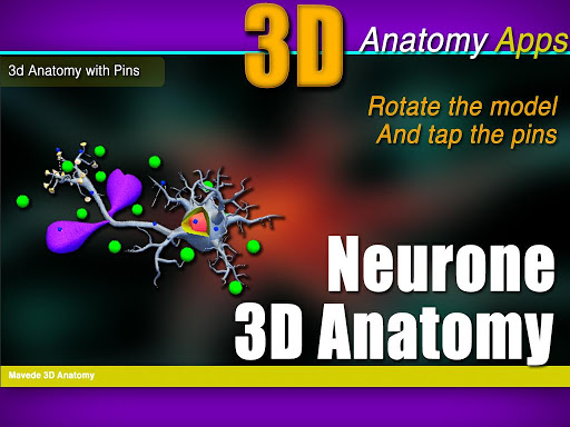 Neurone 3D Anatomy