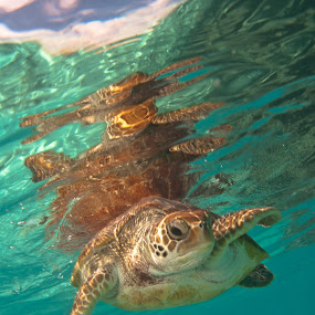 reflection by GUILLAUME FUNFROCK - Animals Sea Creatures ( sky, turquoise, green, bleu, turtle, eye,  )