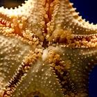Bahama Star