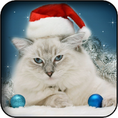 Animals Christmas Wallpapers