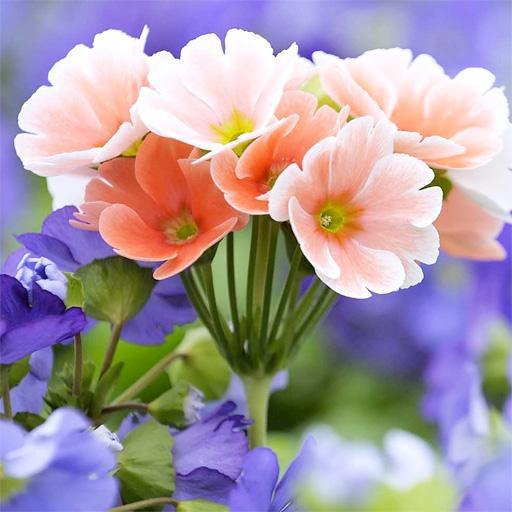 鮮花背景 LOGO-APP點子