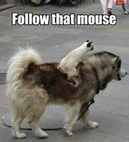 Screenshot of Funny Animal Pics