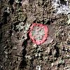 Christmas Wreath Lichen