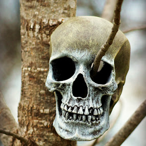 Skull on Branch by Teresa Delcambre - Artistic Objects Other Objects ( skull, tree, bones, branch, twig, skeleton, head )