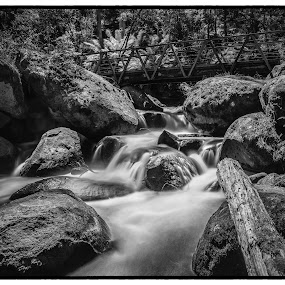 running water by Alan Wright - Landscapes Forests