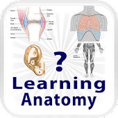 Learning Anatomy Quiz