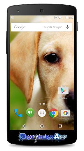 Puppy Dog Background