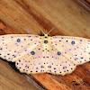 Sterrhine Moth