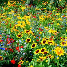 ... by Daniel Gaudin - Flowers Flower Gardens ( nature, exterior, art, flowers, photography,  )