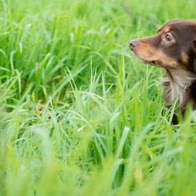 Lua by Marta Felgueiras - Animals - Dogs Portraits ( dog, cadela )