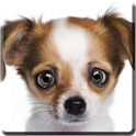 Eye-Puppy Live Wallpaper icon
