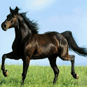 Horse in Motion Live Wallpaper logo
