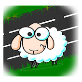 Crossing Sheep