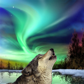 Northern Lights Wolf