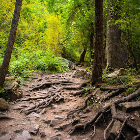Hanging Lake Trail by Derrick Leiting - Landscapes Forests ( exposure, water, peaceful, green, roots, colorado, beauty, long, nature, outdoor, path, summer, trees )
