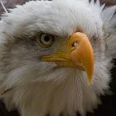 Eagles Puzzles