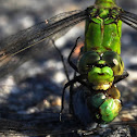 Cameo Green Dragonfly
