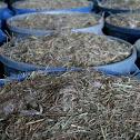 Prairie Seeds