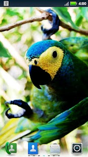 Parrots Live Wallpaper- screenshot thumbnail