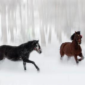 by Dana Corina Popescu - Animals Horses (  )