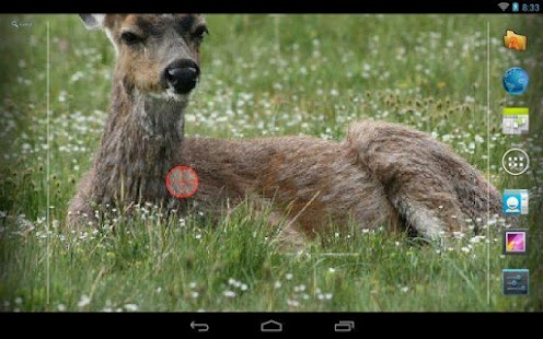 Deer Hunting Live Wallpaper ★- screenshot thumbnail
