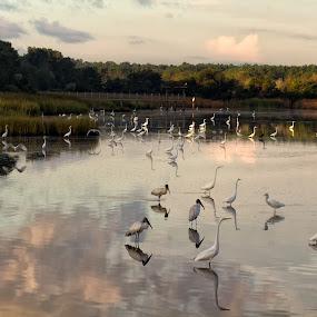Morning at Huntington State Park by Robert Gallucci - Landscapes Waterscapes ( huntington state park, calander )
