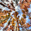 Listen... by Brandon Chapman - Nature Up Close Trees & Bushes (  )
