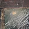 Spider's egg sac