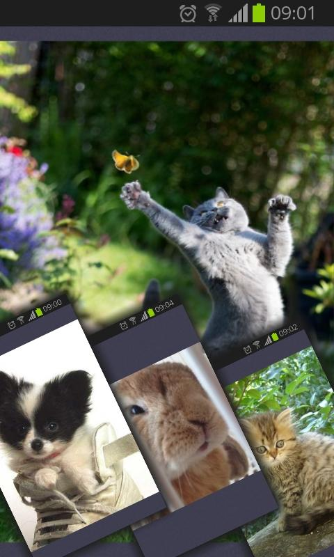 Cute Addict - Animal pictures- screenshot
