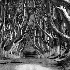 by Noel Salisid - Black & White Landscapes