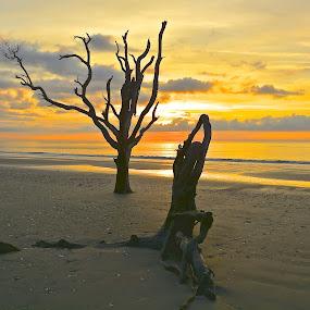YOGA POSE by Bethany Kenney - Nature Up Close Trees & Bushes ( trees, sunrise,  )