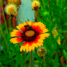 by Ekky Sinting - Flowers Flowers in the Wild