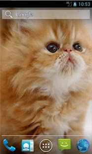 Cute Kitten Live Wallpapers - screenshot thumbnail