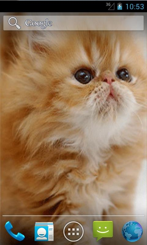 Cute Kitten Live Wallpapers - screenshot