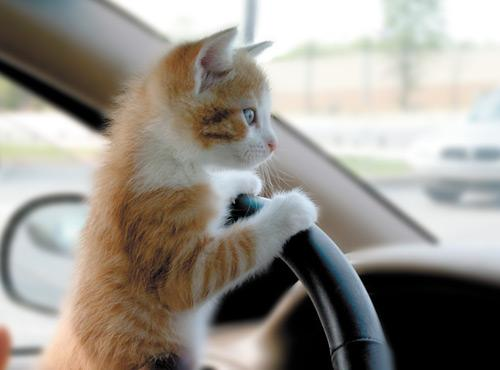 Cats Can't Drive