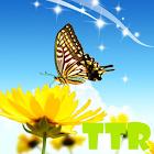 蝴蝶lwp icon