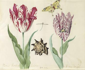 Twee tulpen, een schelp, een vlinder en een libel, blad in het Tulpenboek van Jacob Marrel, 1637-1645