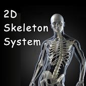 3D Skeletal System