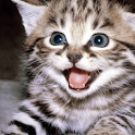 Kitty Live Wallpaper icon