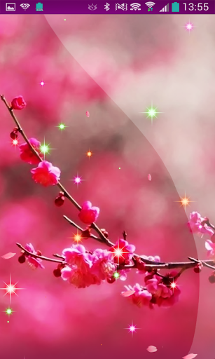 Sakura Cherry Blossom HD LWP
