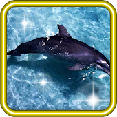 Dolphin Screens live wallpaper