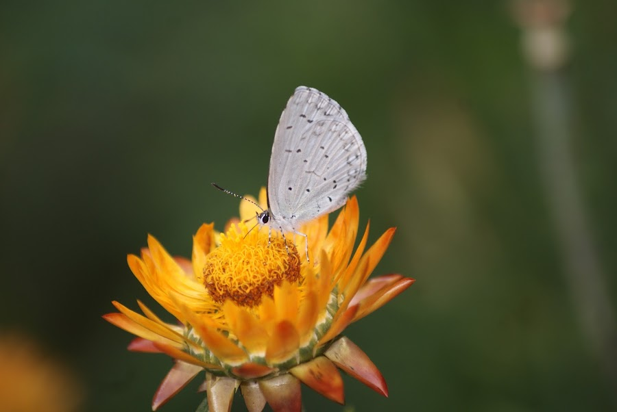 by Mehak Chadha - Flowers Single Flower