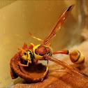 Potter wasp Series_2